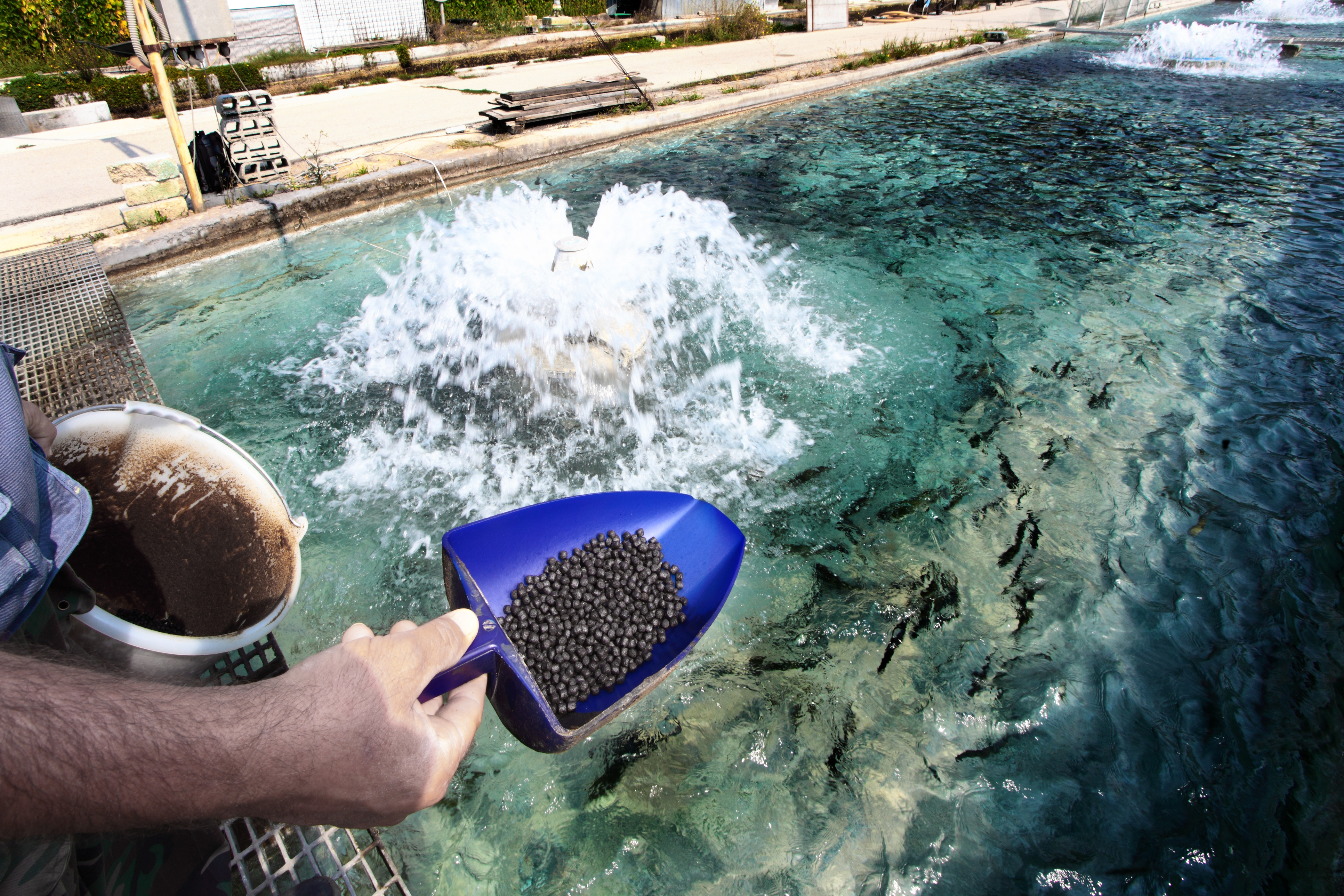 The Pros And Cons Of Fish Farming News Digest Healthy