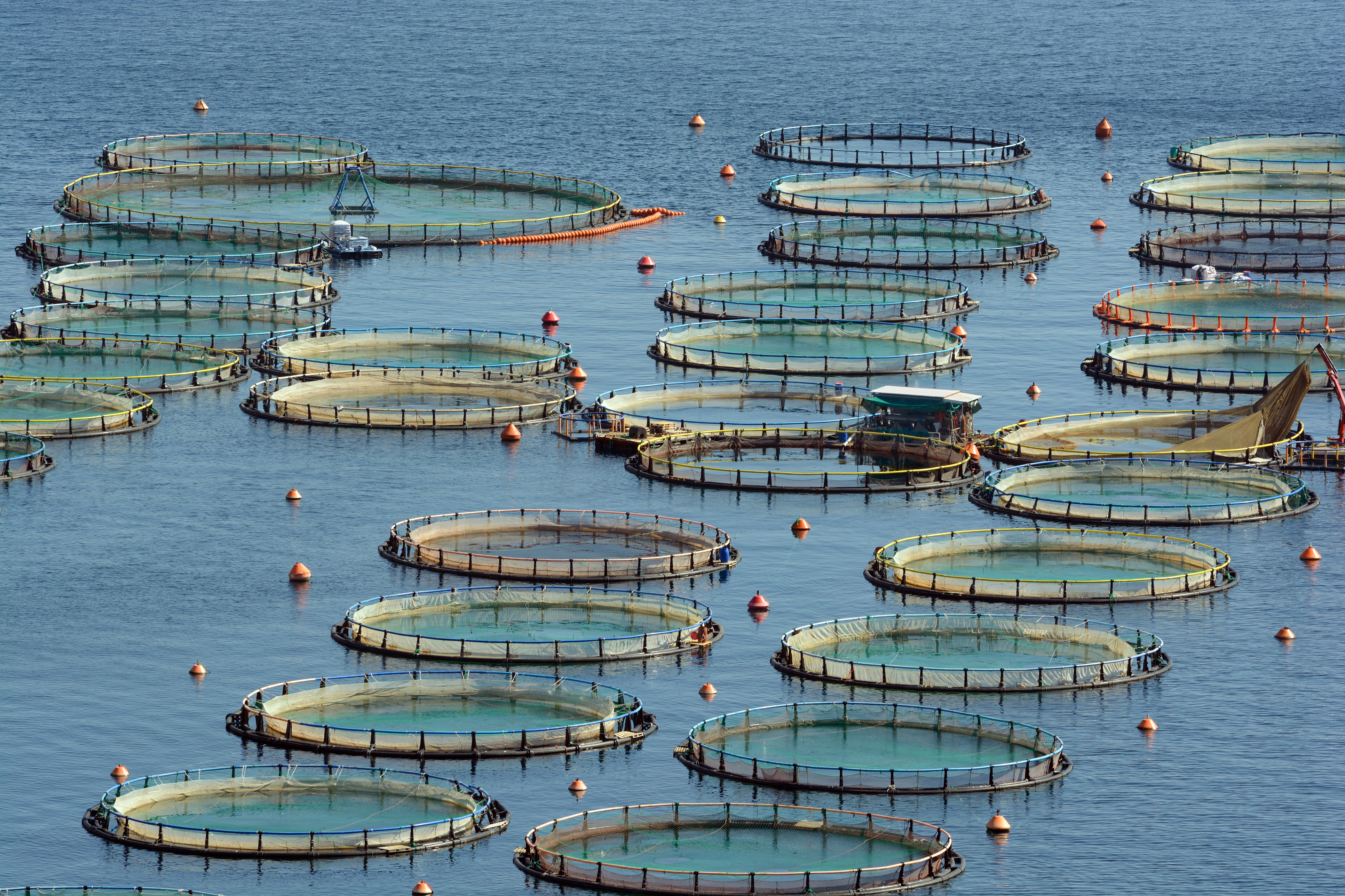 The pros and cons of fish farming news digest healthy for Fish farming pros and cons
