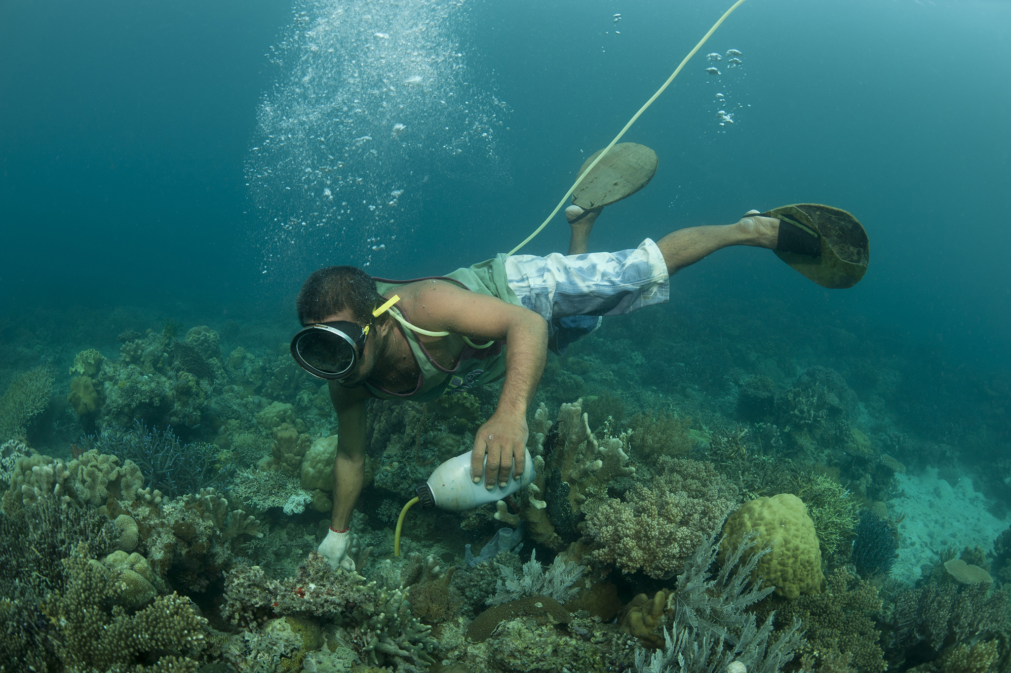Destructive Fishing is Widespread in Southeast Asia - News ...